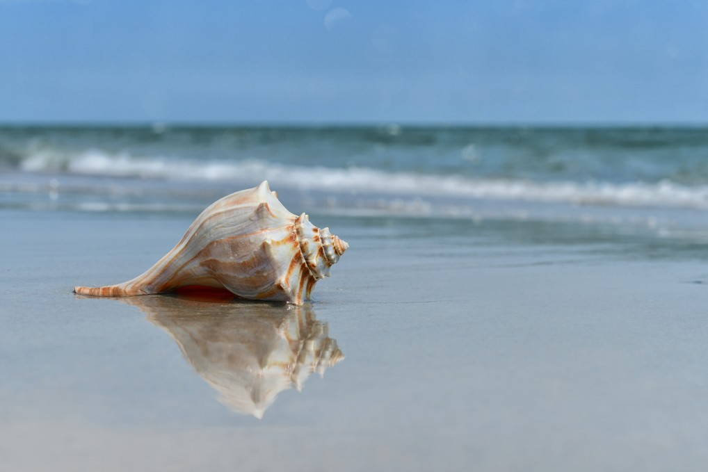 beautiful shell lwashed upon the beach at the ocean