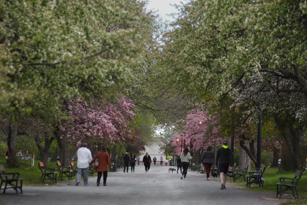 Students in Albany in Springtime